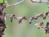 Crise sanitaire : le message des abeilles
