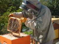 le manager, le coach et l'apiculteur