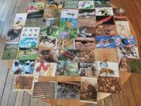 Photolangage des abeilles