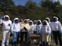 Découverte de l'intimité des abeilles chez Famille Mary Apiculture